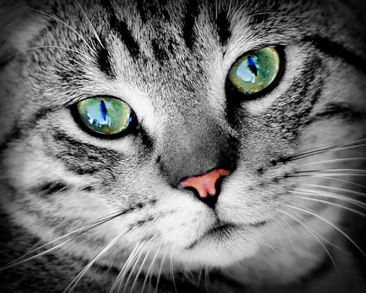 Siete curiosidades de la visión de los gatos que usted de seguro desconocía